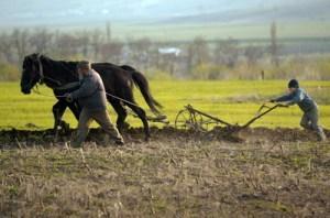 Agricultura italia 1